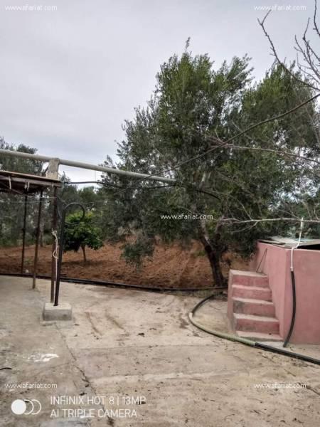 Annonce sur Affariat Tunisie pour: Maison et Terrain agricole