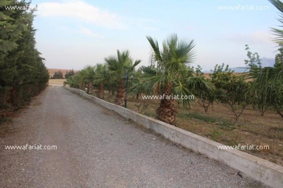 Annonce sur Affariat Tunisie pour: La Ferme 1 T911 Zaghouan