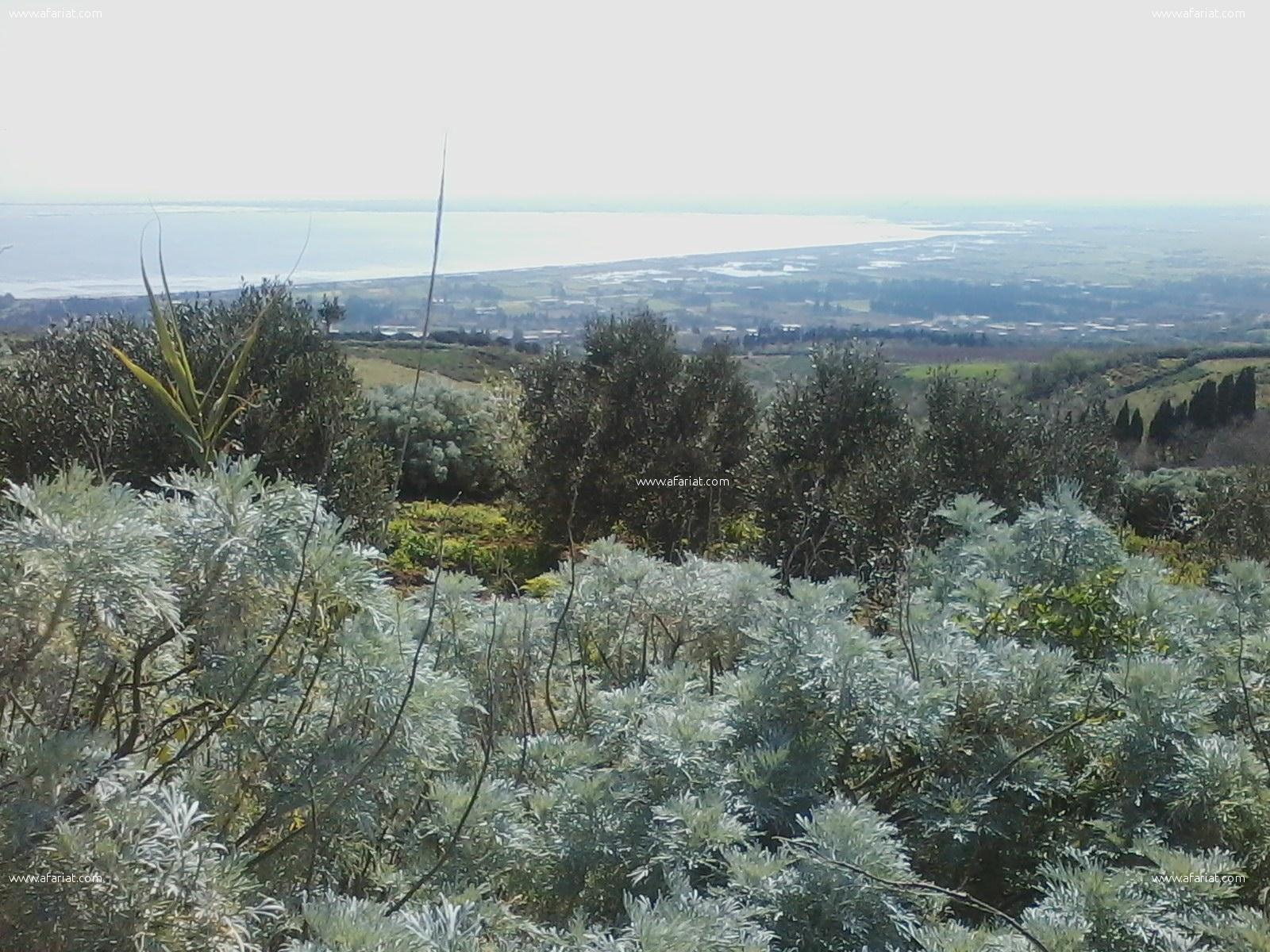 4 hektar lieux paradisiaque