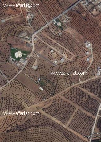 Terrain de 3 hectares à Sanheja (la Manouba)