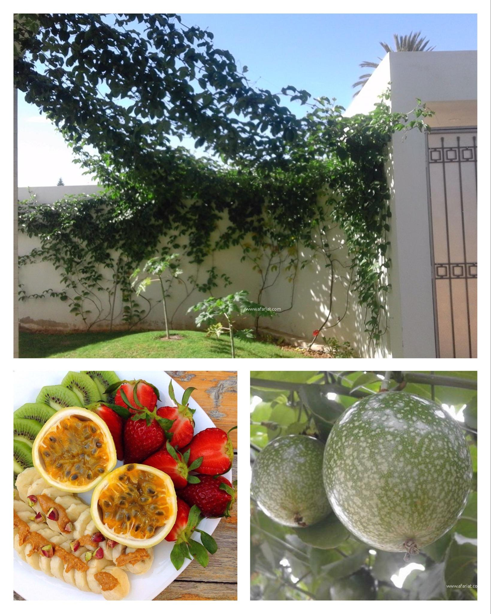Ventes plantes exotiques fruitiers